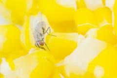 еда мухы Стоковое Изображение RF