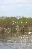 Еда находки от группы в составе муха фокуса белой предпосылки чайки мягкая Стоковые Изображения RF