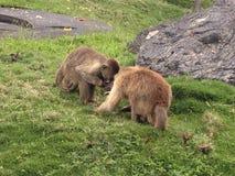 Еда обезьян Стоковая Фотография