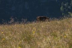 еда лошади сена Стоковая Фотография