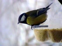 Еда пункта для птиц Стоковые Изображения
