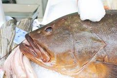 еда сырцовая Рыба Стоковая Фотография RF