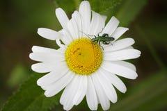 Еда цветка Стоковые Изображения