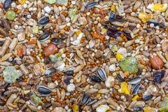 Еда для хомяка полила ровный слой Стоковое фото RF