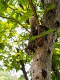 Еда squirrele Стоковое Изображение RF