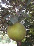 Еда Sri Lamnka Стоковое Изображение RF