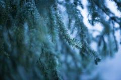 Елевая ветвь дерева с гололедью Стоковое Изображение