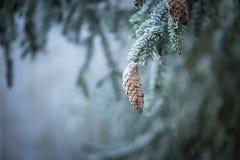 Елевая ветвь дерева с конусом и гололедью Стоковая Фотография