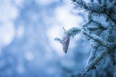 Елевая ветвь дерева с конусом и гололедью Стоковое Фото