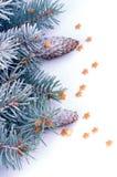 Елевая ветвь с изморозью Стоковые Фотографии RF