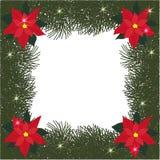 Елевая квадратная рамка с цветками poinsettia и яркого блеска Стоковое Изображение RF