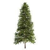 Елевое изолированное дерево Стоковое Фото