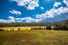 Елевое плато Стоковые Изображения