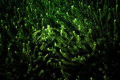 Елевые ветви заполняют рамку подкрашивано Стоковое Изображение RF