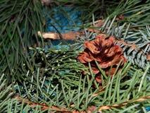 Елевые ветви и конус Стоковая Фотография RF
