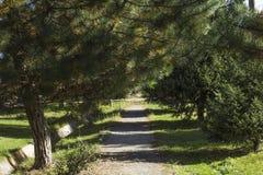 Елевые листы Стоковое Изображение