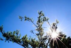 Елевые листья дерева Стоковое Изображение