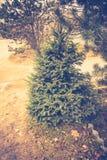 Елевые фильтрованные ветви дерева Стоковое фото RF