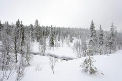 Елевый лес дерева покрытый снегом в ландшафте зимы Стоковое Изображение RF