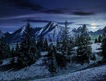 Елевый лес на травянистом горном склоне в tatras на ноче Стоковые Фото