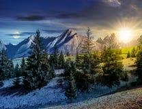 Елевый лес на травянистом горном склоне в tatras Стоковая Фотография RF