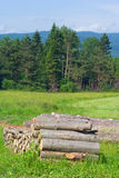 Елевый тимберс внося в журнал на лесе, Польше Стоковое Изображение