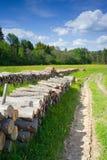 Елевый тимберс внося в журнал на лесе, Польше Стоковые Изображения RF