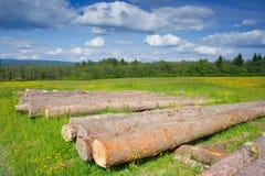 Елевый тимберс внося в журнал на лесе, Польше Стоковое Фото