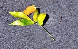 Единственные яркие желтые лист на том основании Стоковое Фото