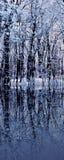ледистые валы Стоковое фото RF