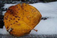 ледистые листья Стоковая Фотография