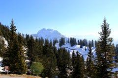 Ели в баварской горной вершине стоковые фотографии rf