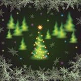 Ели рождества Стоковые Изображения