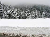 Ели Snowy в зиме Стоковые Изображения