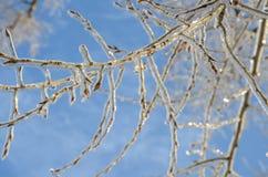 лед на деревьях Стоковая Фотография RF