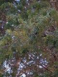 лед на деревьях Стоковая Фотография