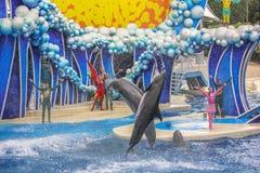 2 дельфина выполняют Стоковое Фото