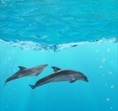 2 дельфина под открытым морем Стоковое Изображение RF