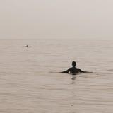 дельфины плавая Стоковая Фотография
