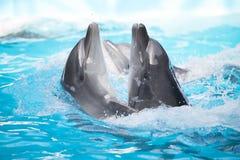 дельфины 2 танцы Стоковые Фотографии RF