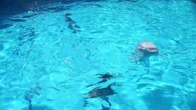 дельфины 3 видеоматериал