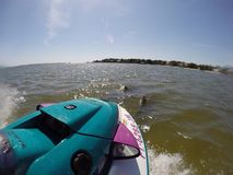 дельфины Стоковая Фотография RF