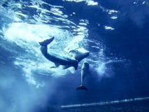 дельфины Стоковое фото RF