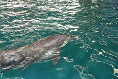 дельфин 6 стоковое фото rf