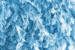 Ель в заморозке Стоковая Фотография RF