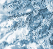 Ель в заморозке Стоковое фото RF