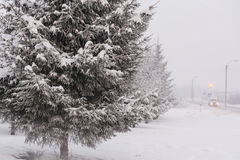 Ель в зиме Стоковые Фотографии RF