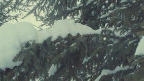 Ель в снеге, снежности акции видеоматериалы