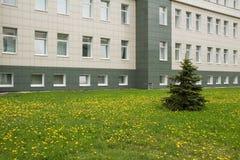 Ель и одуванчики около офисного здания Стоковая Фотография RF