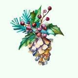 Ель-конус вектора акварели с ветвями ели и Стоковые Изображения